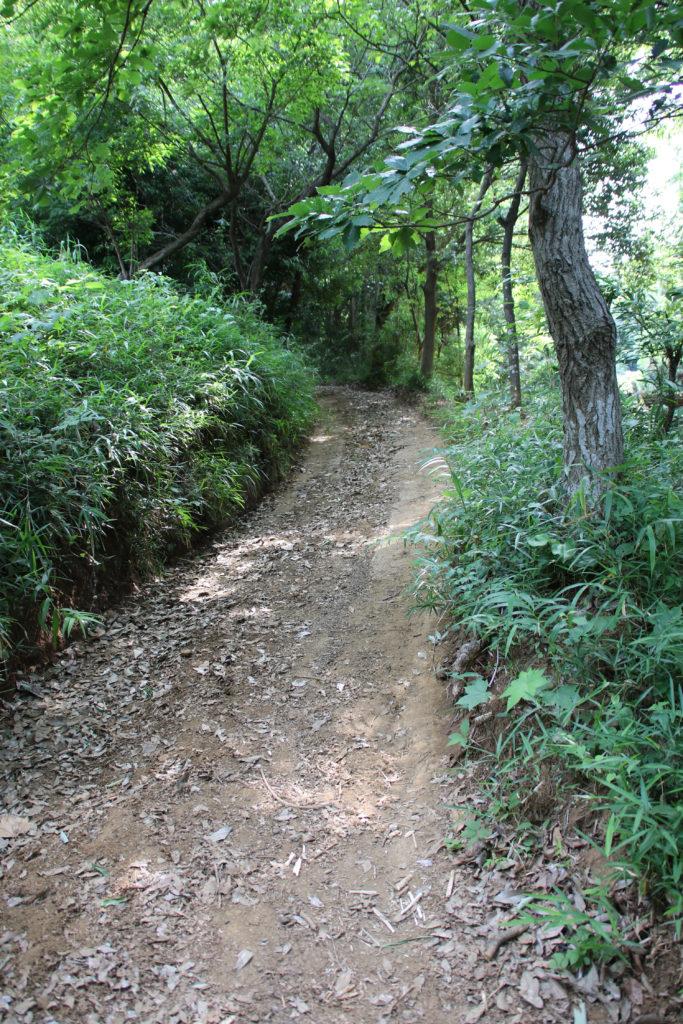 前回、52.6km/h出ていた急な狭い林道