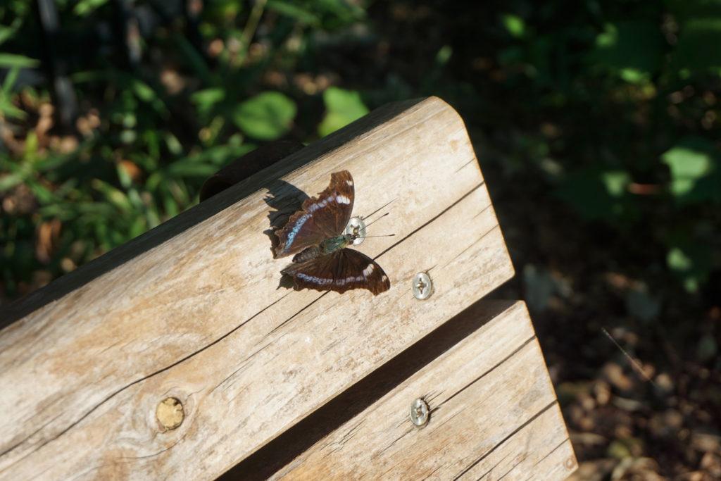 反対側のベンチに止まる蝶