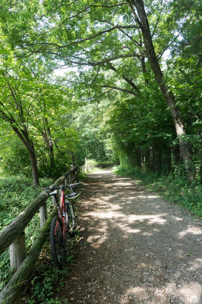 SIXトレイルの林道