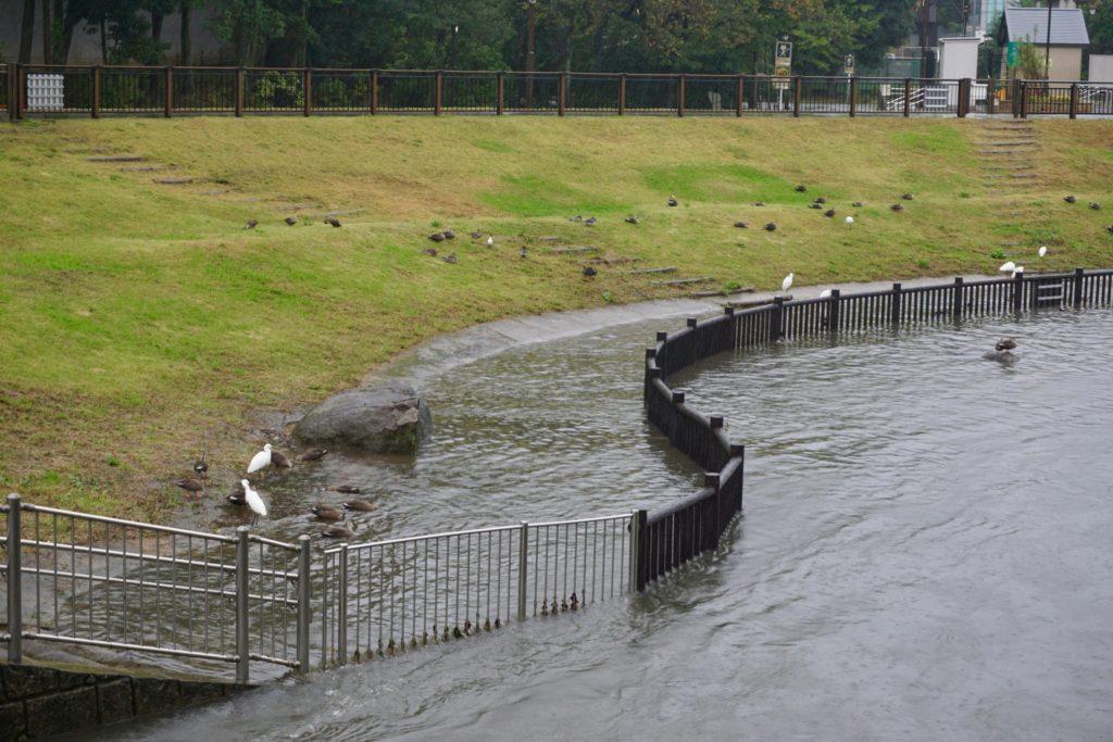 親水公園も浸水中