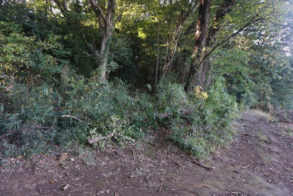 以前周回で使っていた林の出口に倒木が