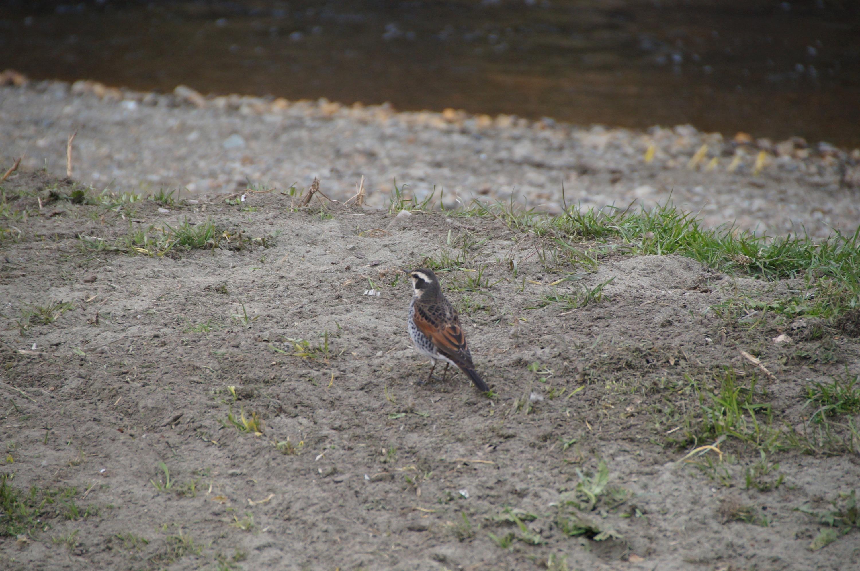 鳥さんで合焦したはずなのに、奥の草地にピントが来ている