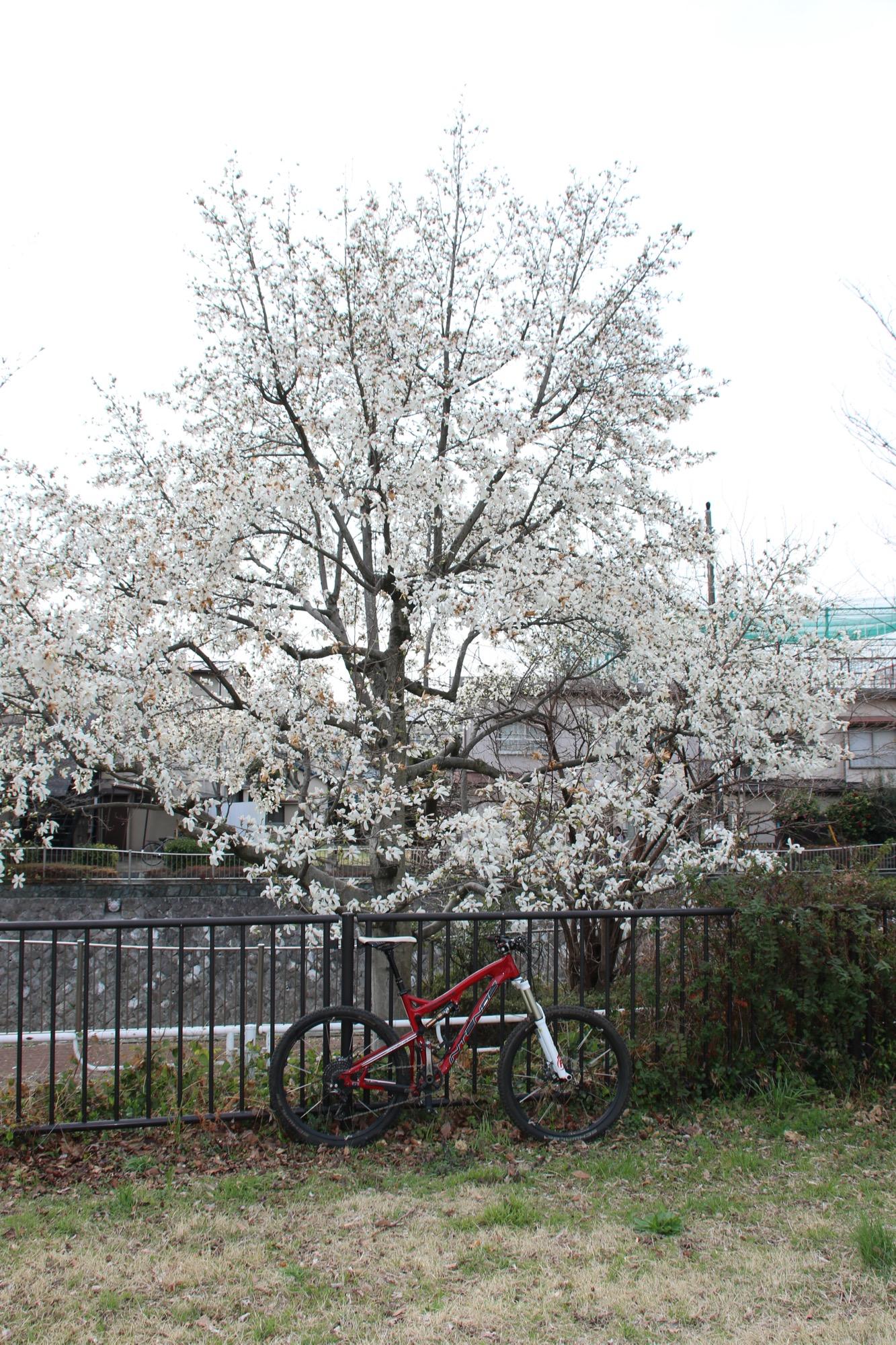 桜だけではなく