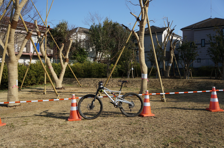 河岸の広場に移植されてきた木