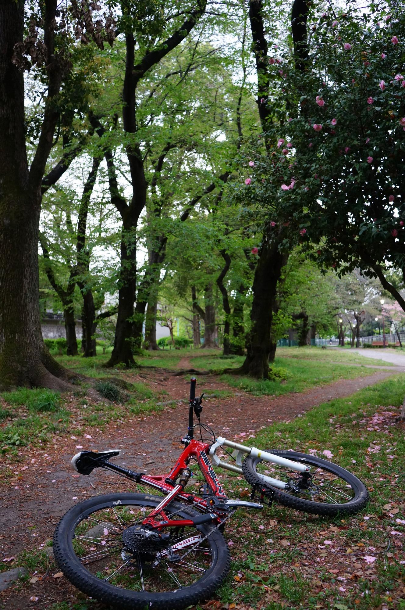 静かになった公園トレイル