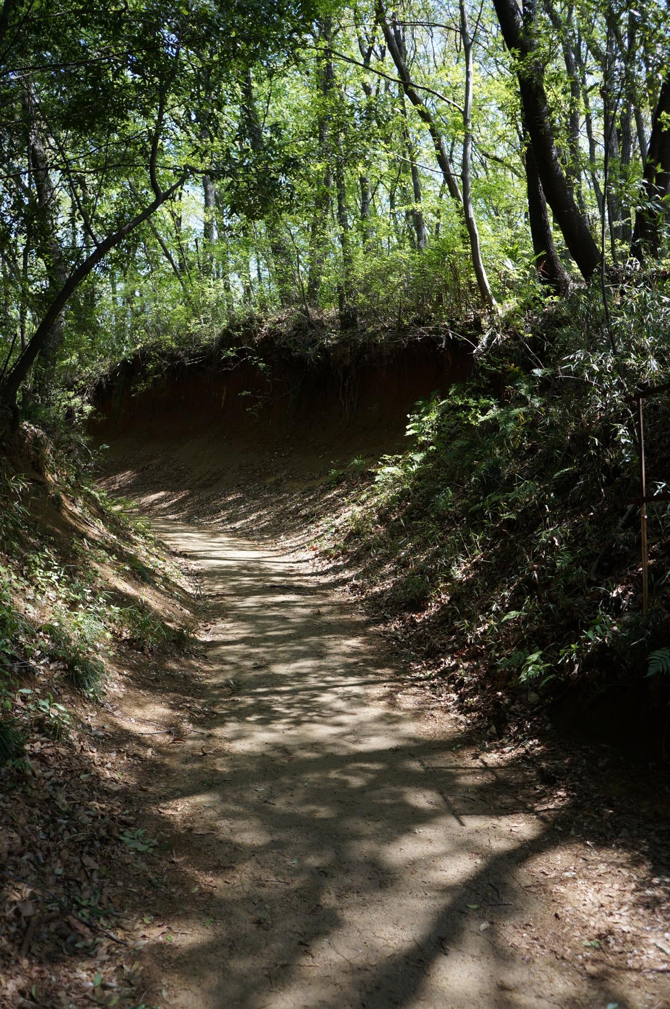 M Trail