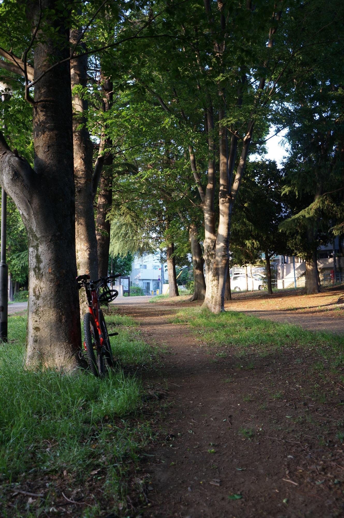 ご近所の平地トレイル
