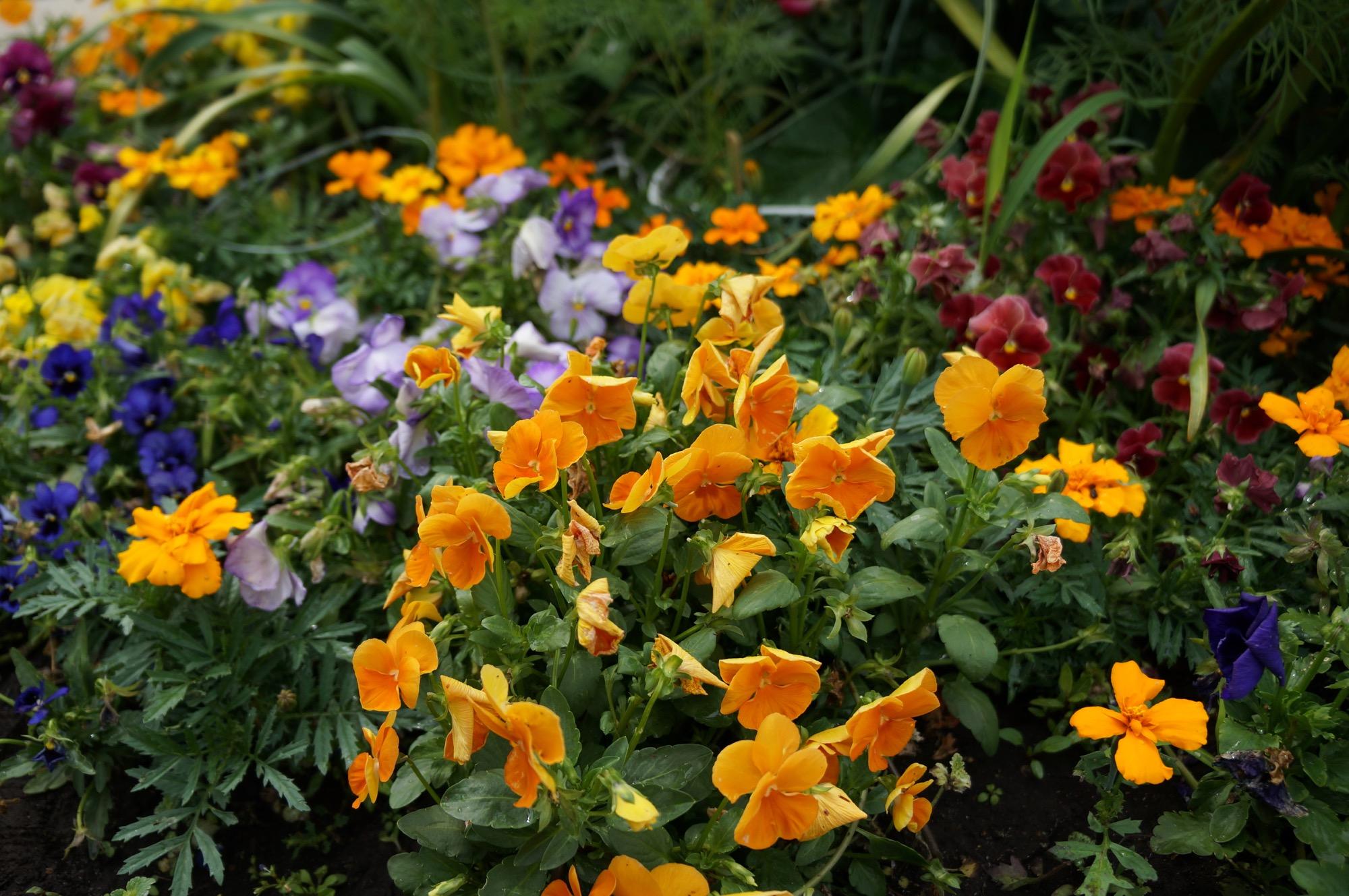 きれいなお花たち