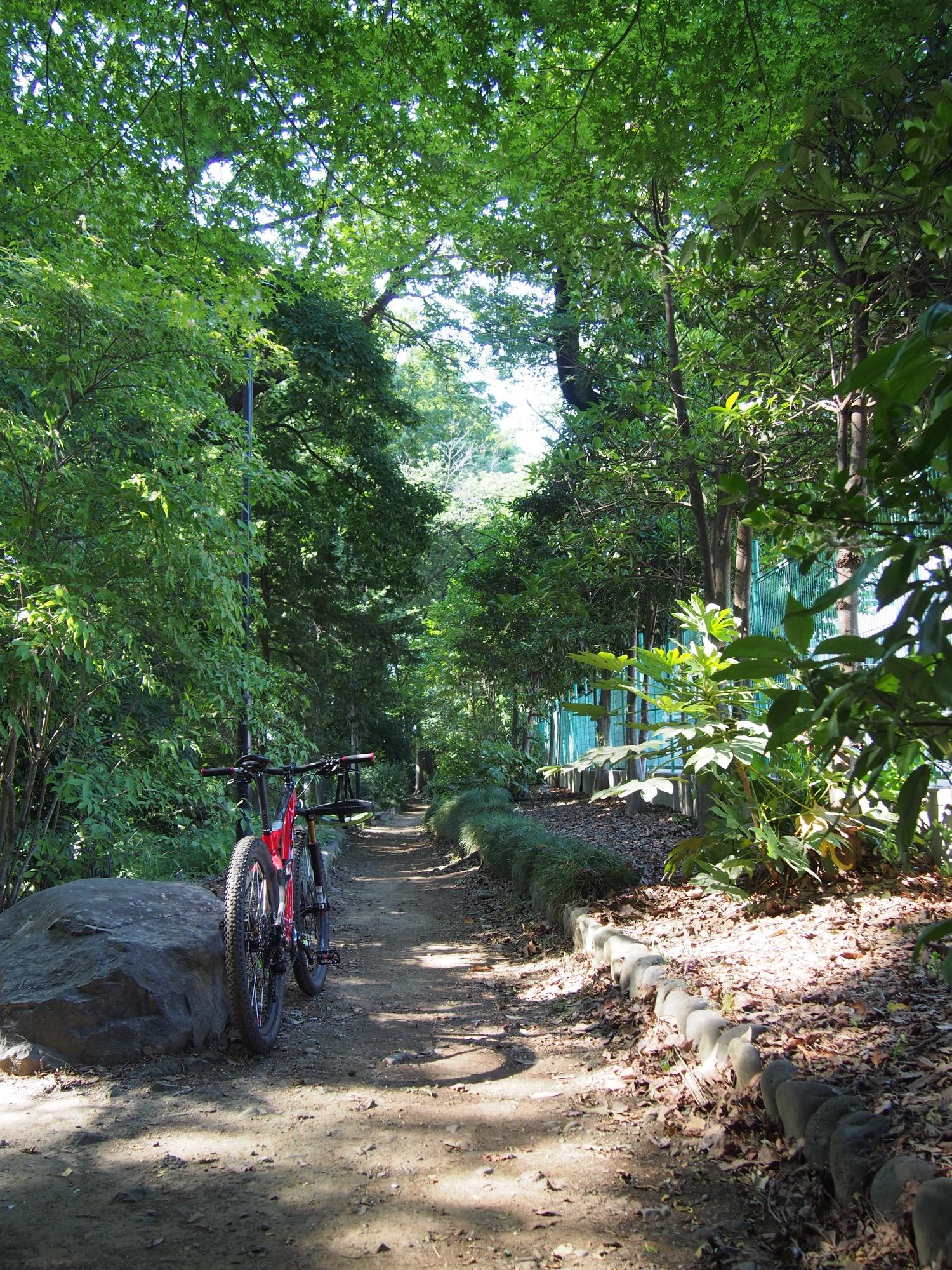少し涼しい木陰の道