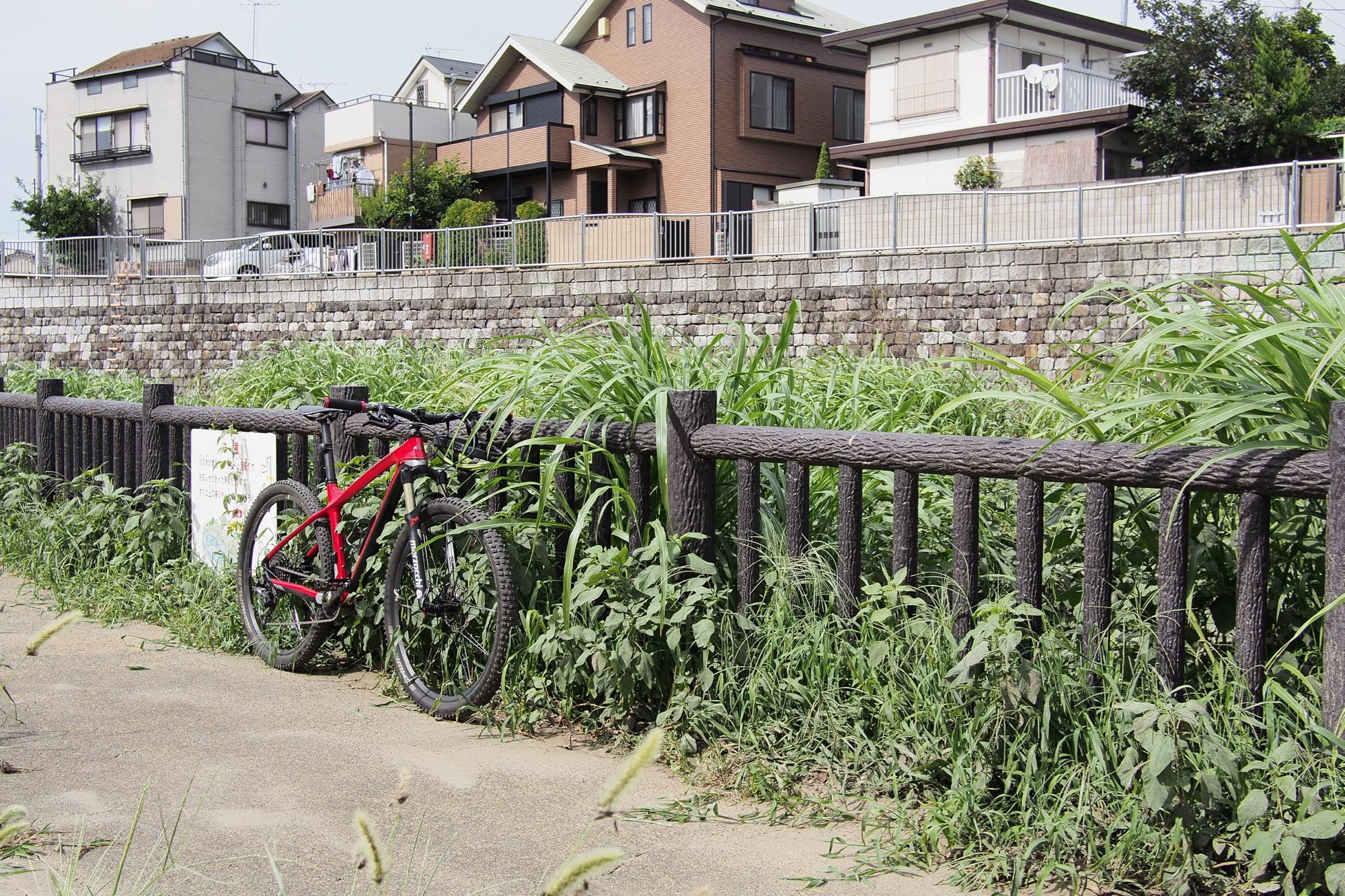SB親水公園が雑草に覆われる