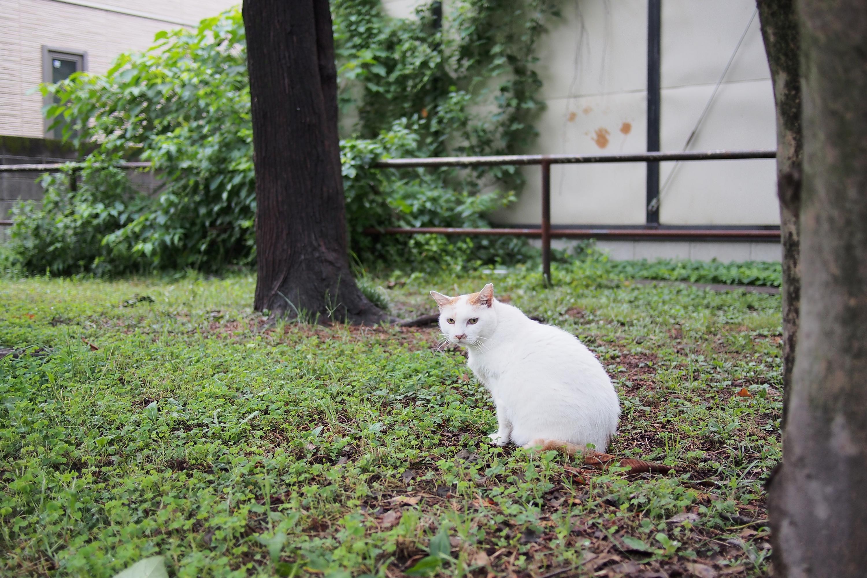 今日は接近を許してくれたネコちゃん