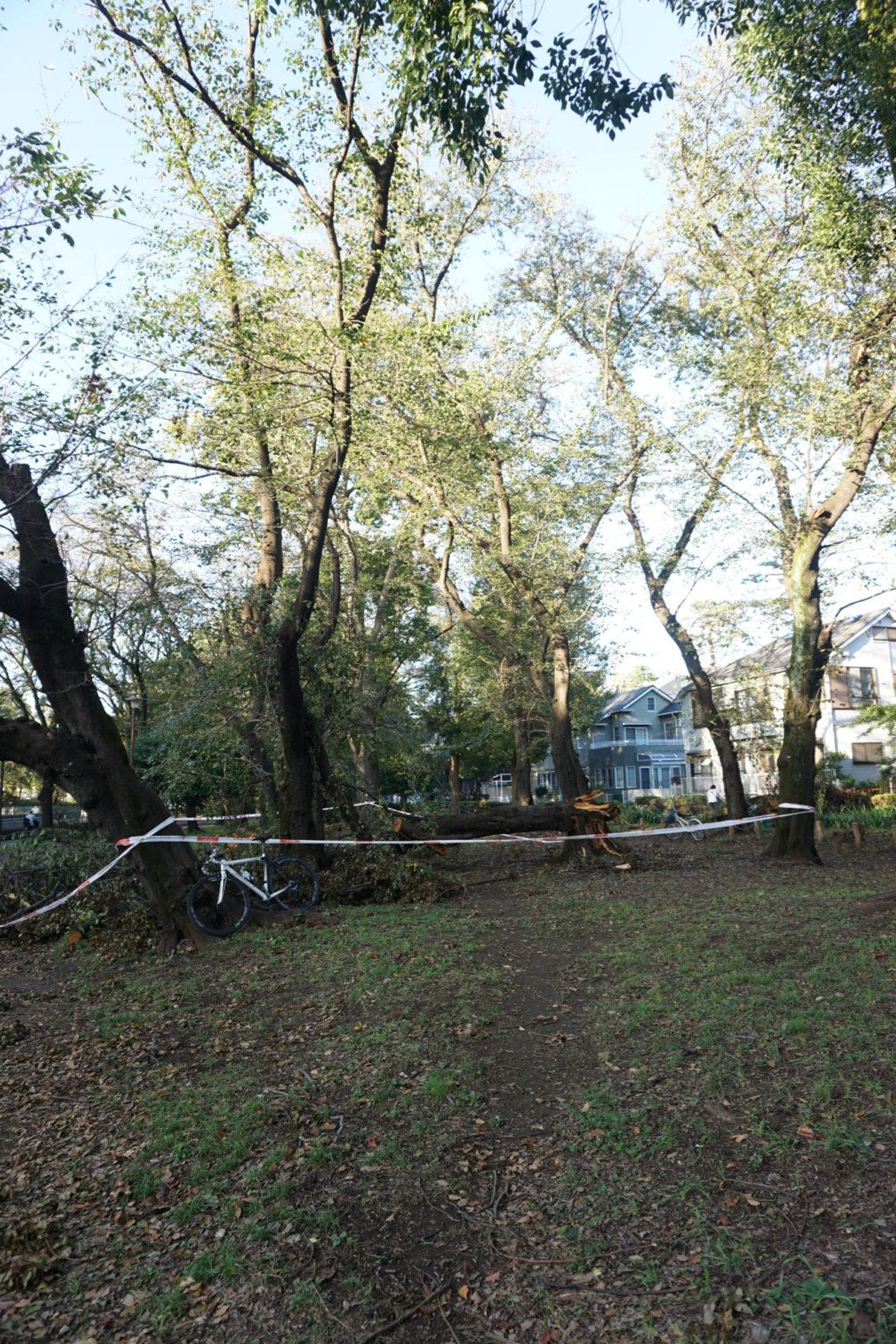 昨年撮影した、Addictが立てかけられた木です
