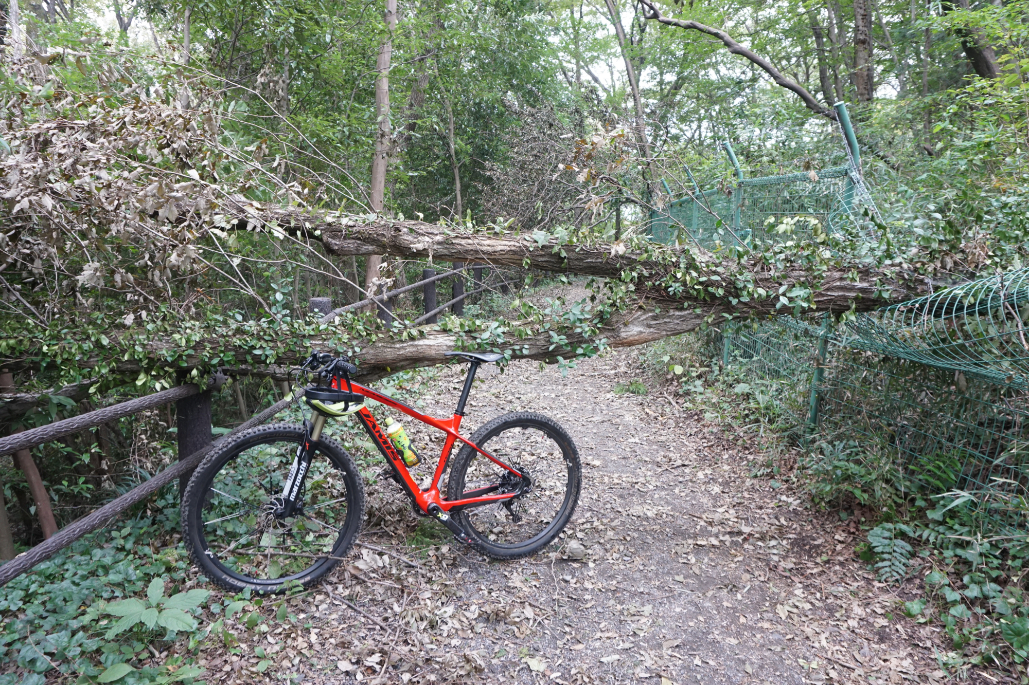 フェンスをなぎ倒し、林道を塞いだ倒木