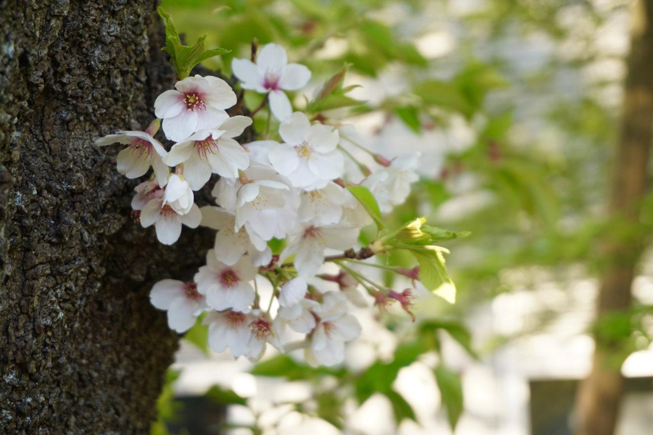幹から出ているかわいい花