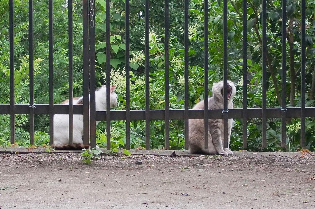 地域猫(2)