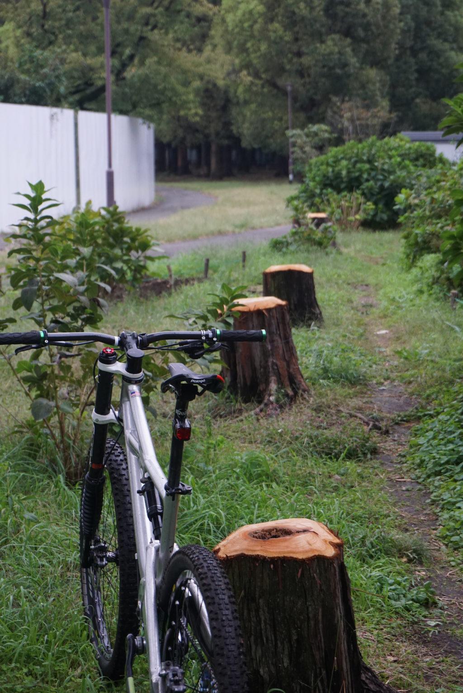 台風被害を受けて伐採されたのか、計画的な伐採なのか