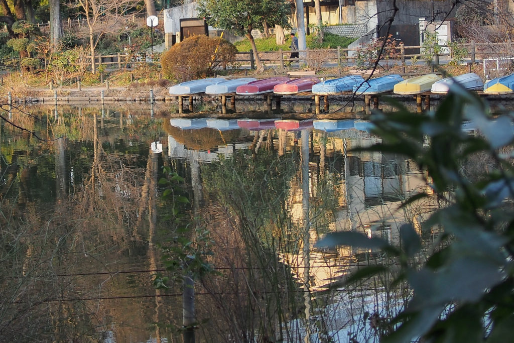 善福寺公園 上の池