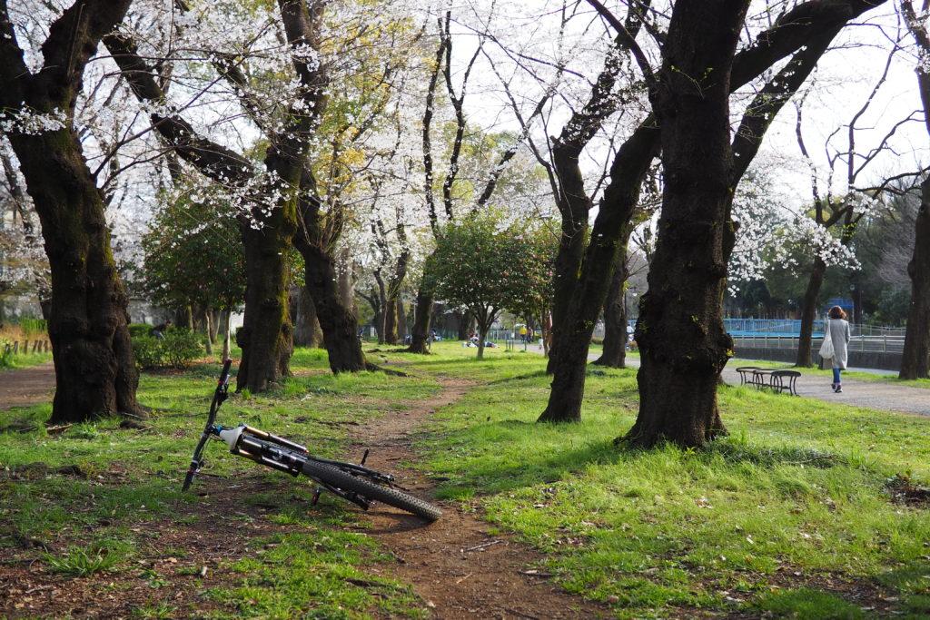 桜の木の下のミニトレイル