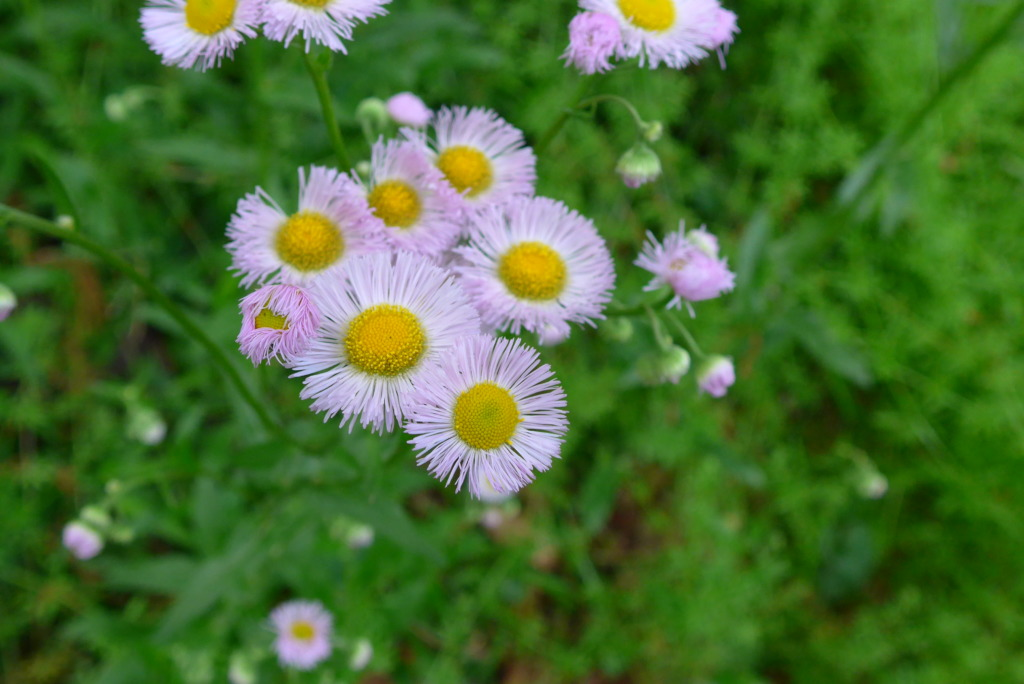 SB山の花