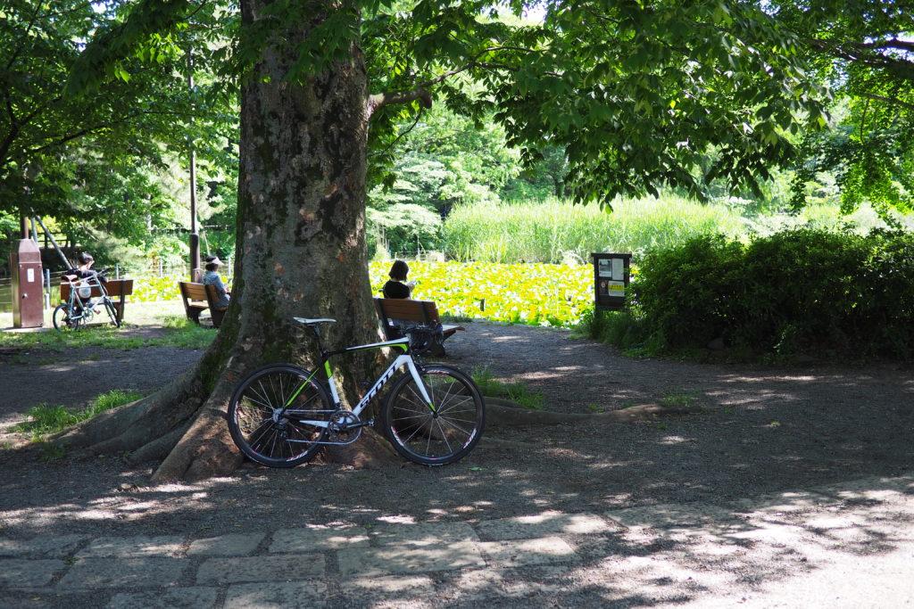 善福寺公園 下の池側