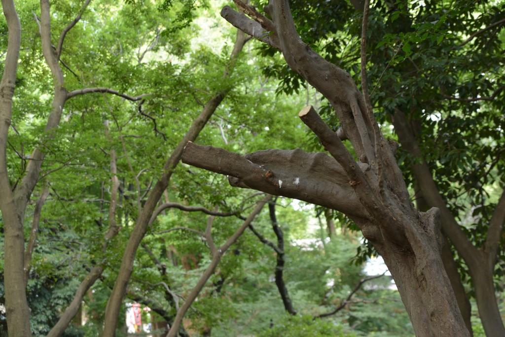 こちらは剪定された木