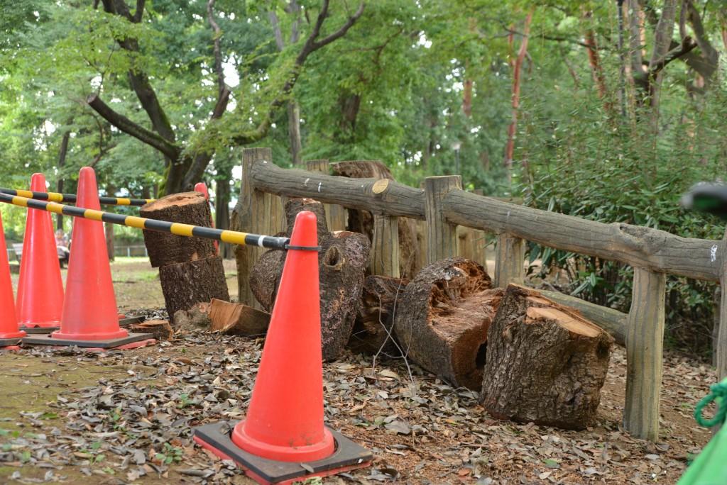 工事の関係で切られた木ですかね