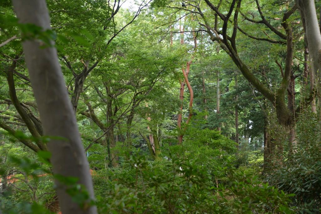 杉並区の森の中