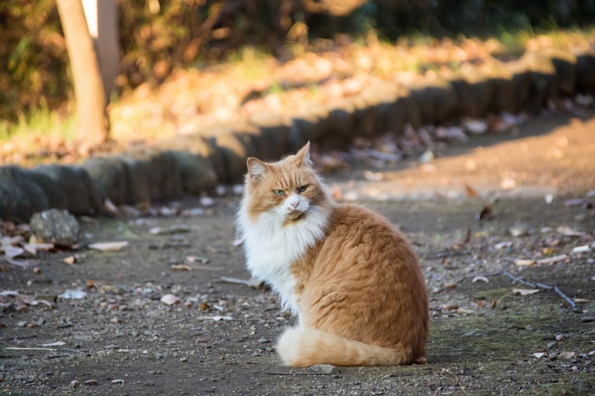 丸々とした猫