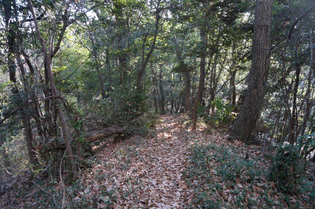 急斜面の尾根も倒木が取り除かれていました