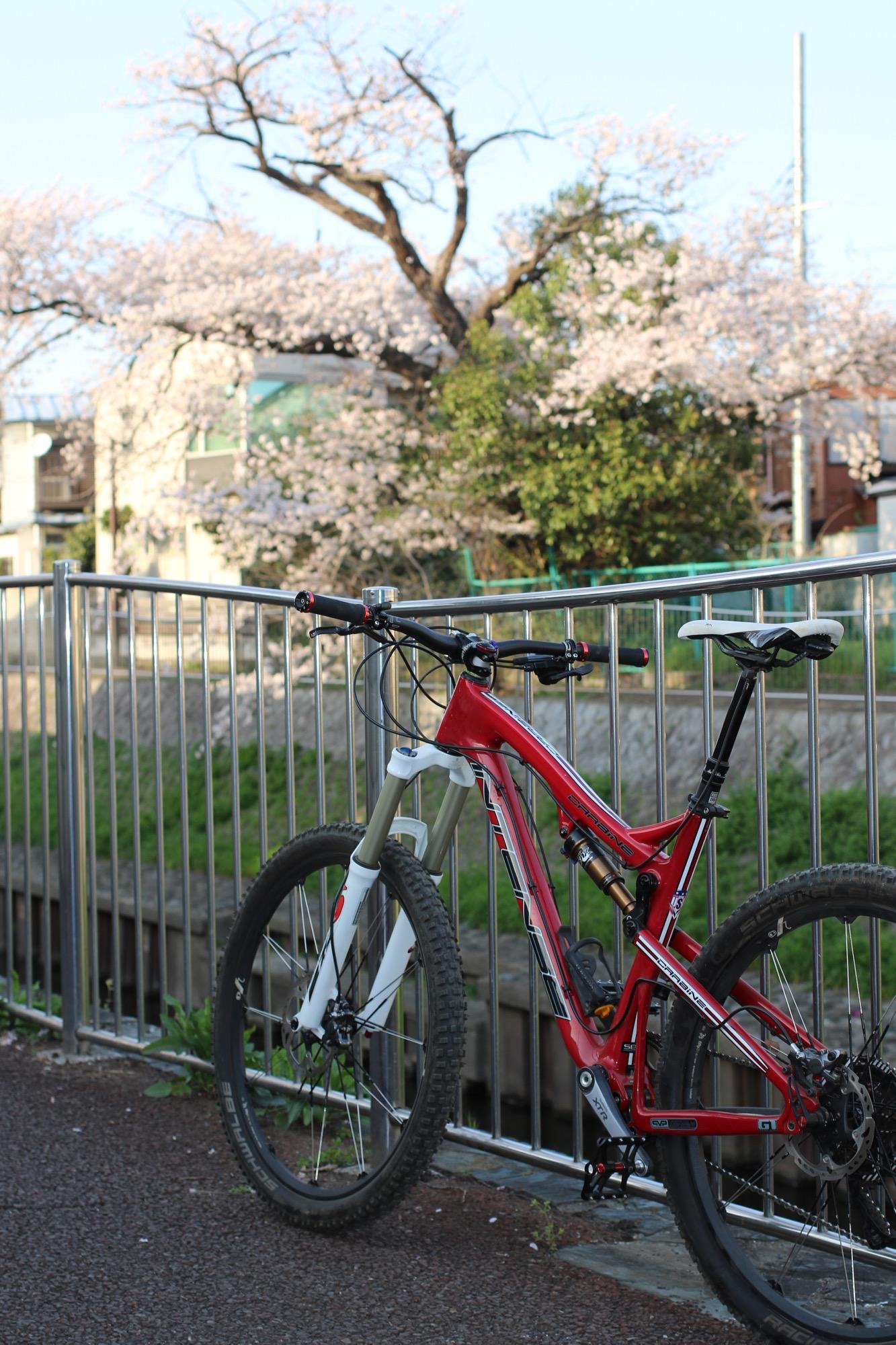 カービン桜