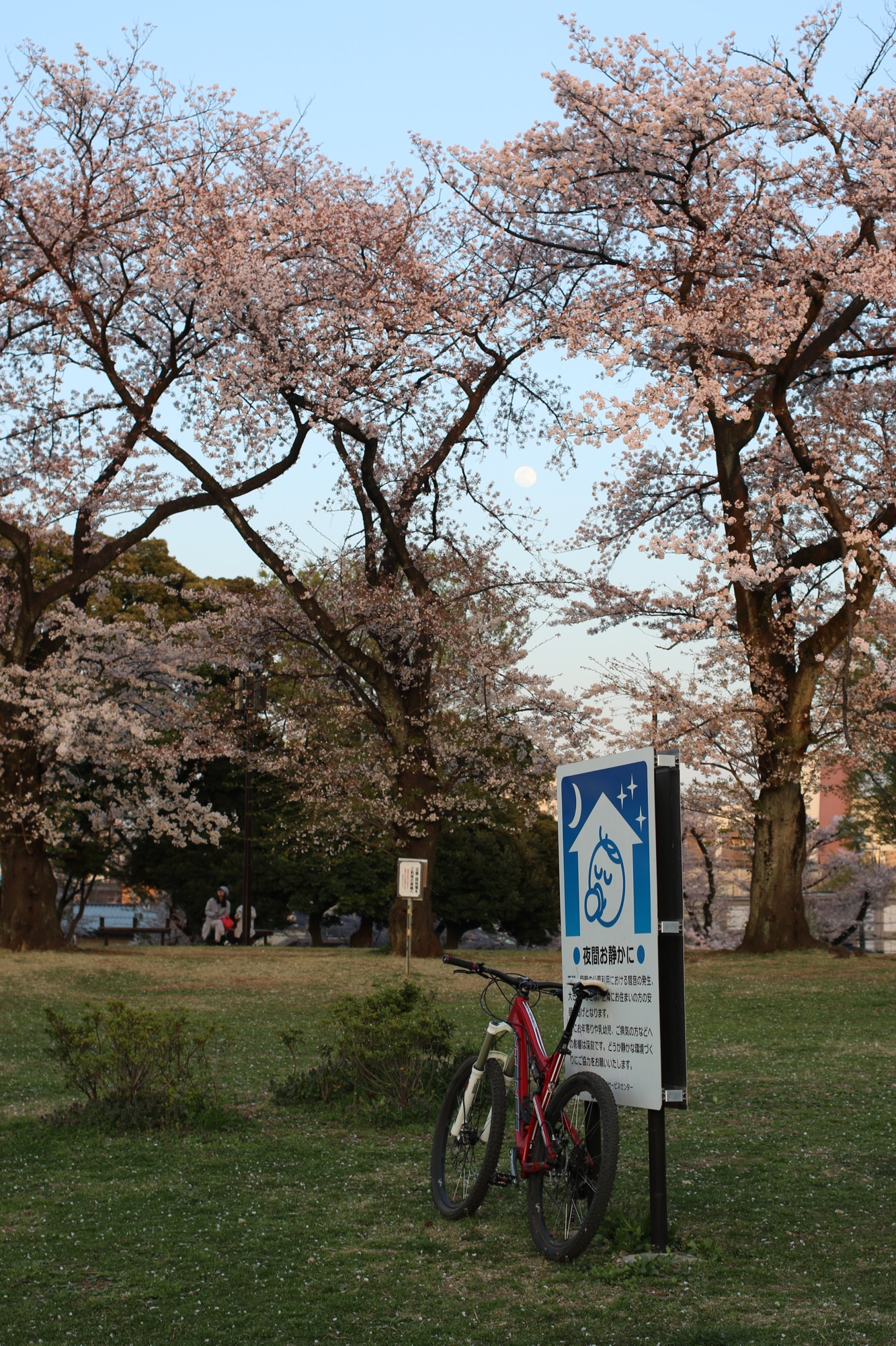 桜とお月さんと