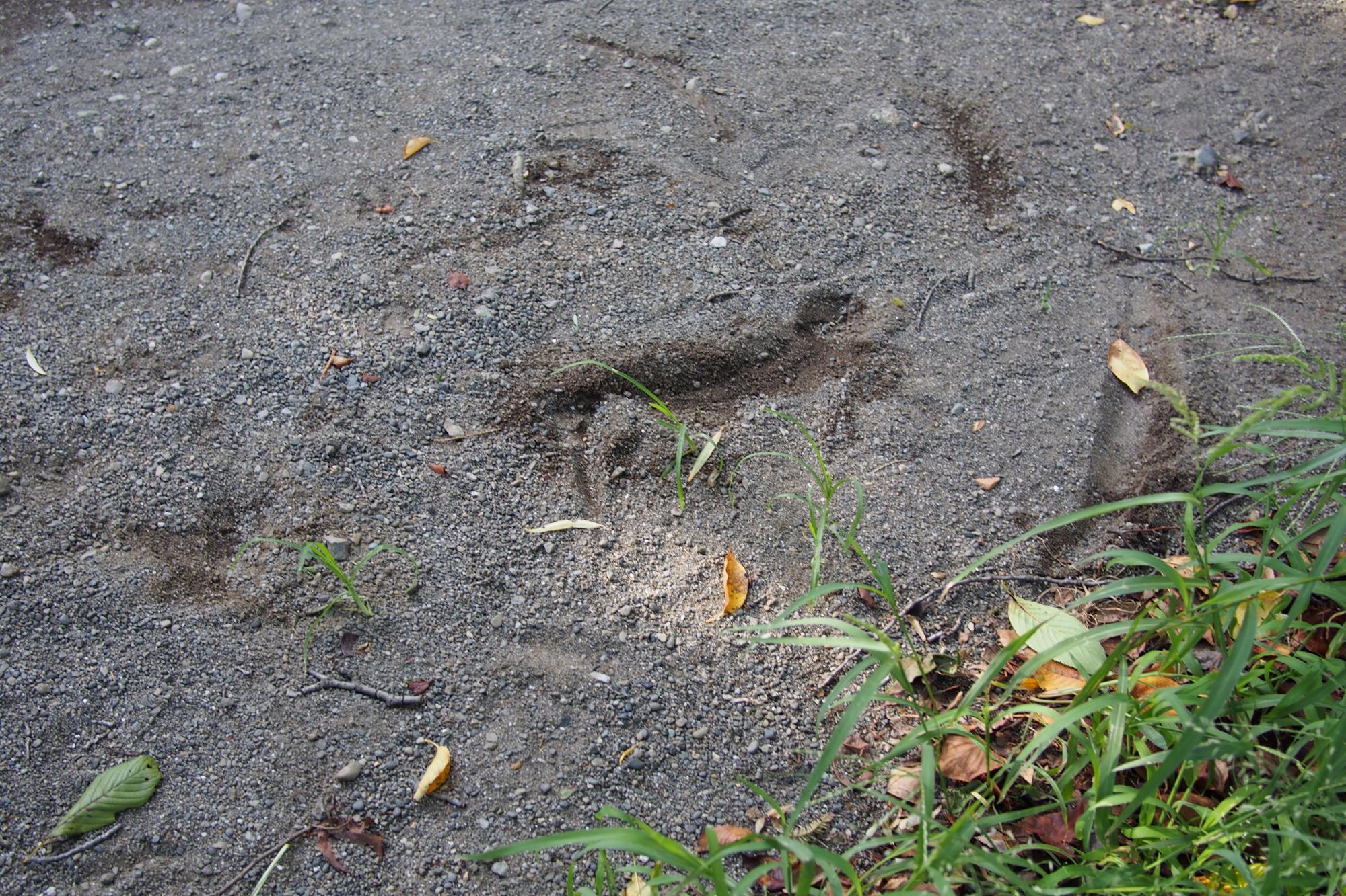 低速の急旋回で砂地に前輪を取られてしまい