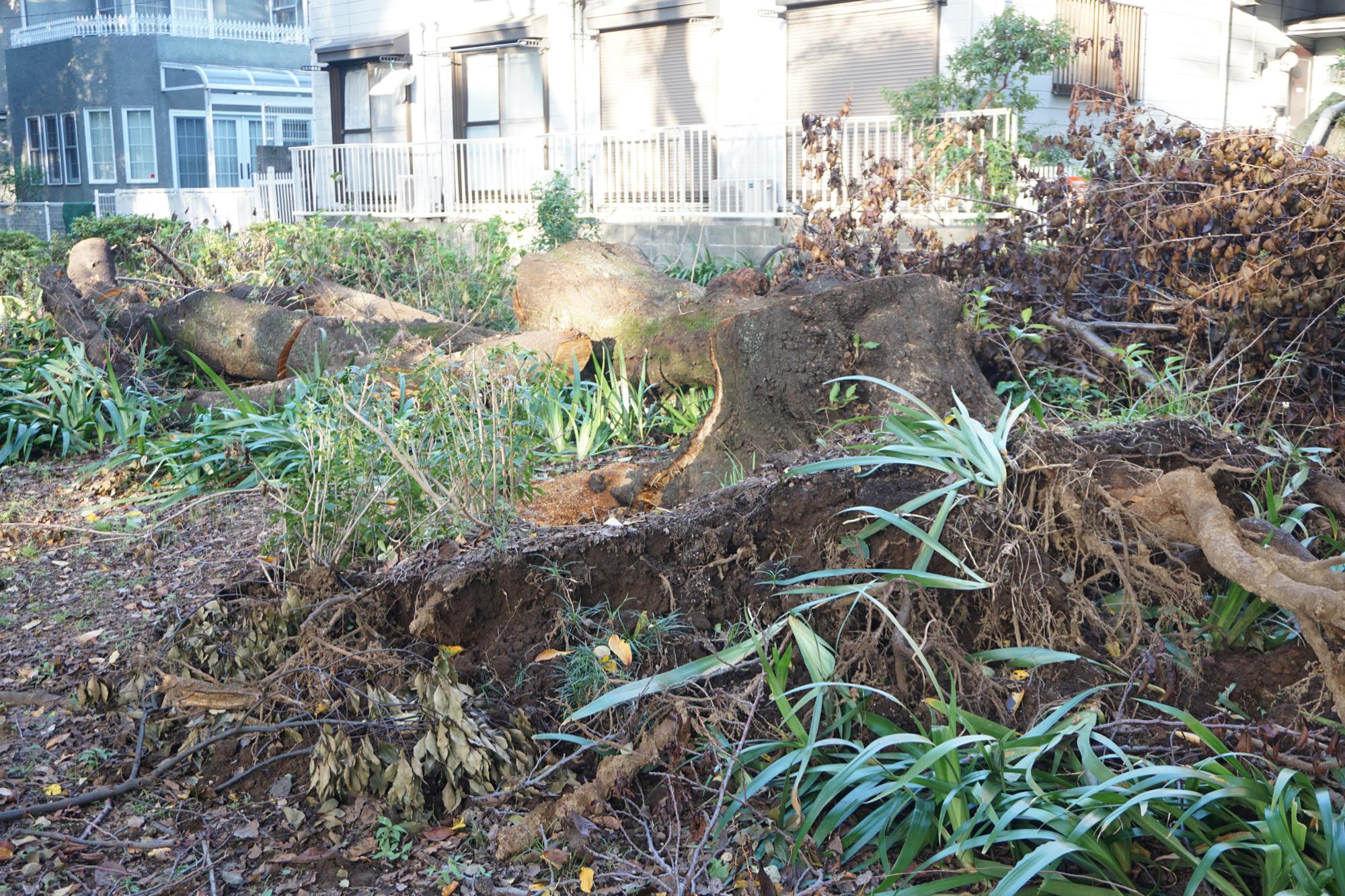 かなりの木がダメージを受けている