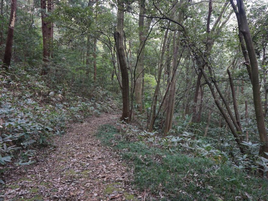 6 Trail