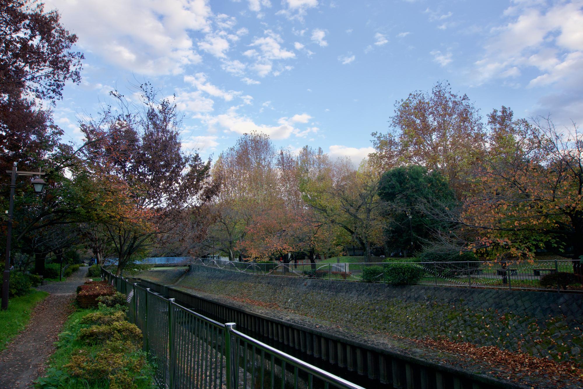 公園の紅葉は