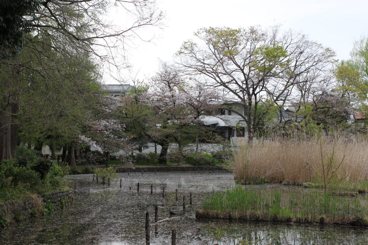 善福寺公園下の池