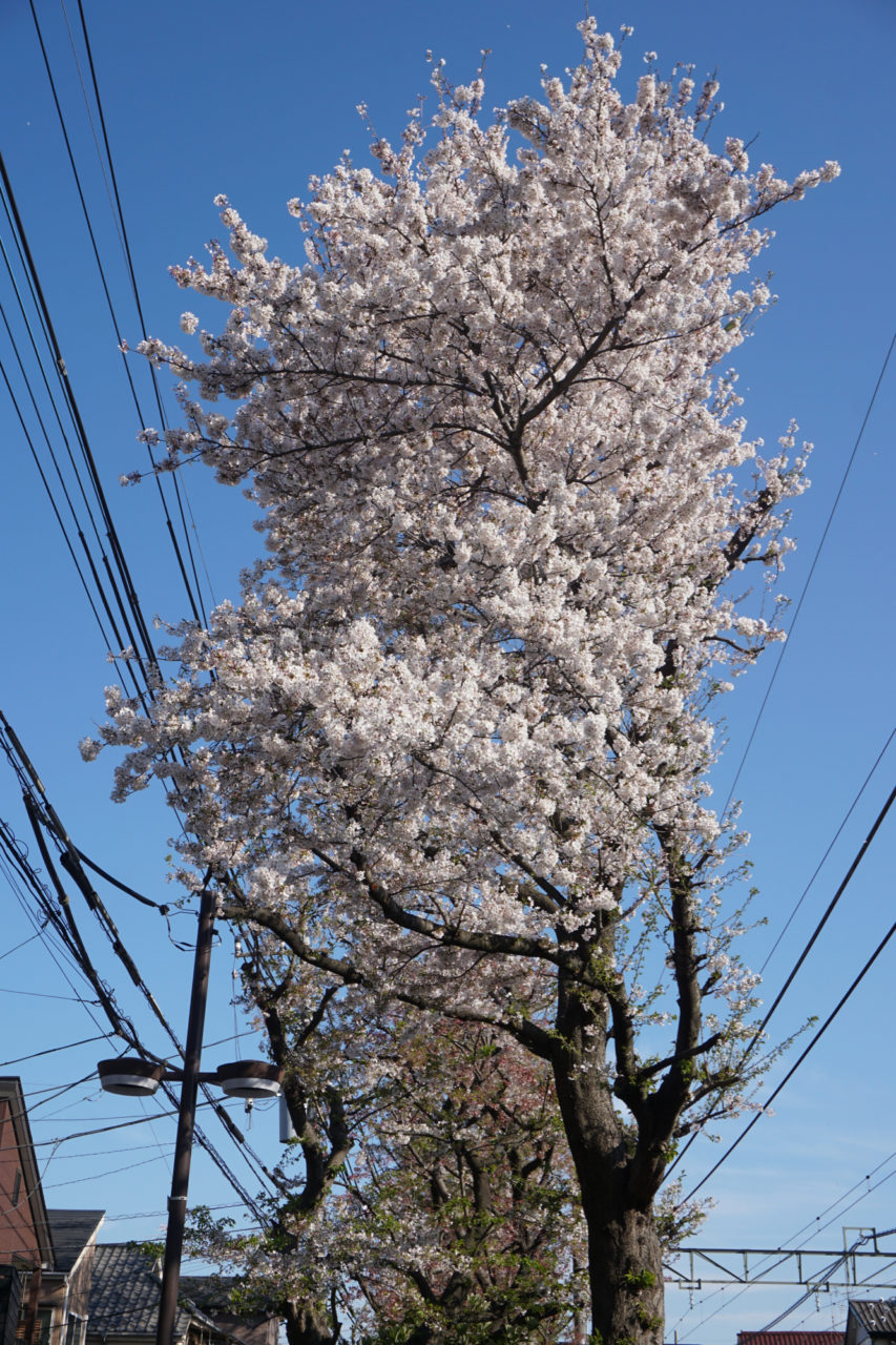 まだ花を付けている木もありましたが