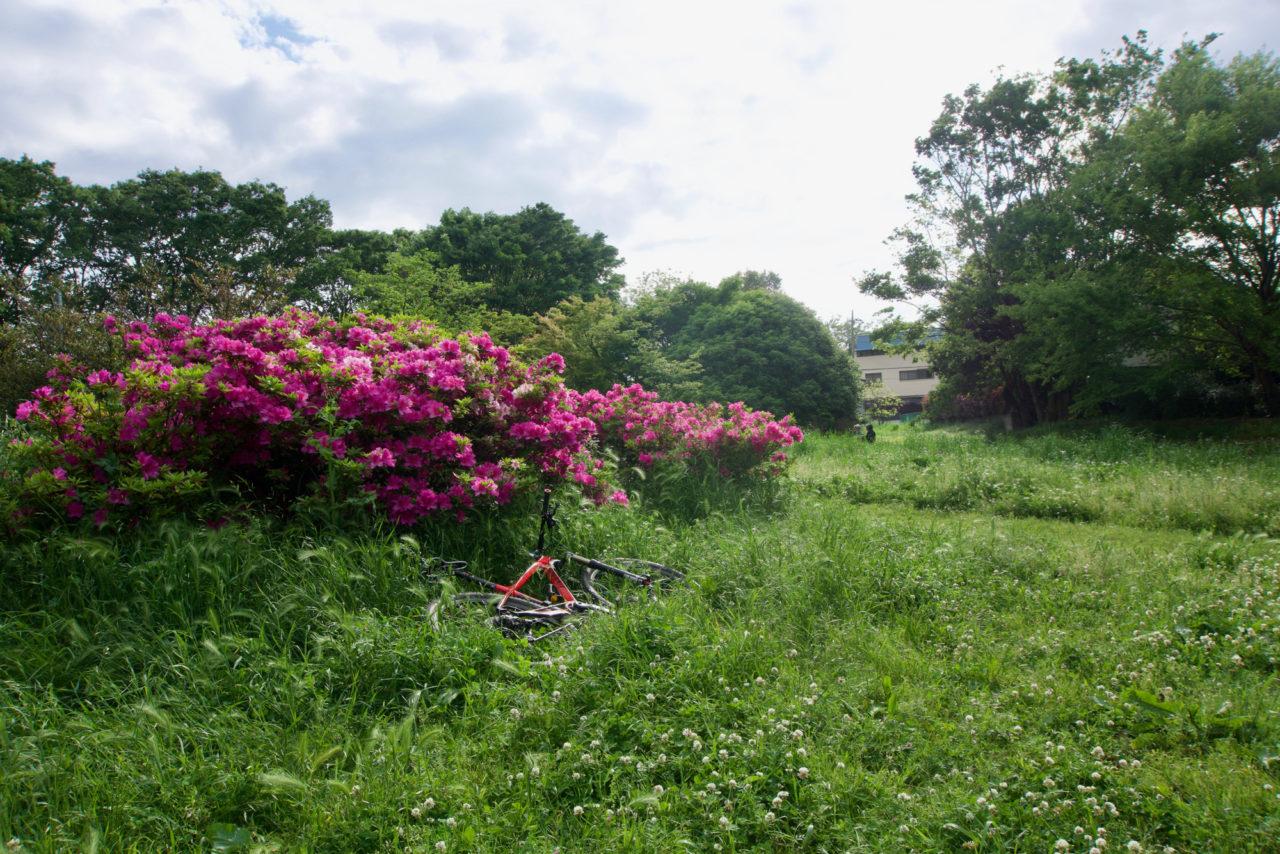 桜の季節もいいけど、新緑の季節もいいですね
