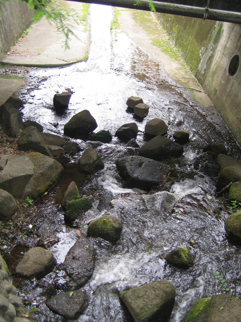 こちら、10年前の2009年5月に撮った写真。小ガモたちはここを流されて下まで行きました。