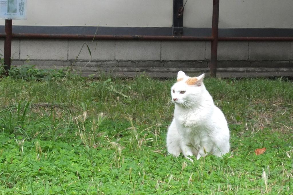 地域猫(1)
