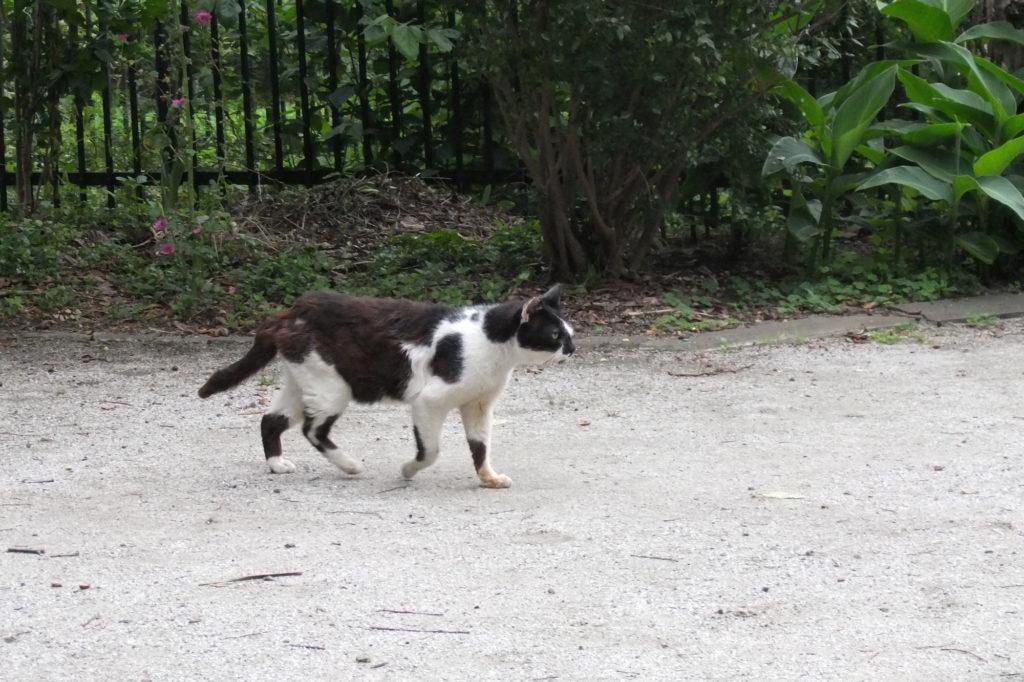 地域猫(3)