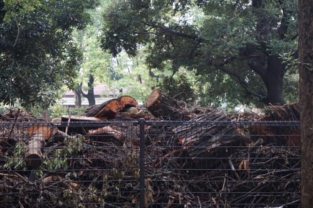 細断された木の幹も高く積まれている