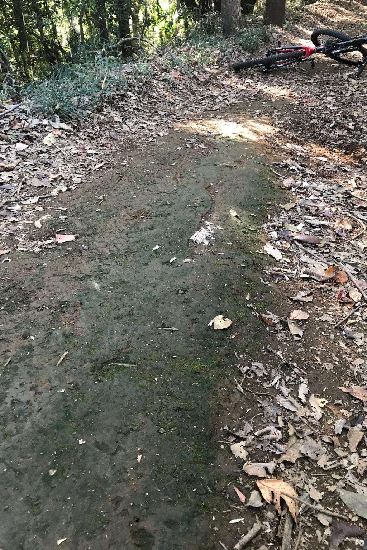 路面の苔になぜ気づかなかったのか