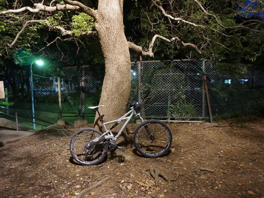 今晩一番明るかった木の下