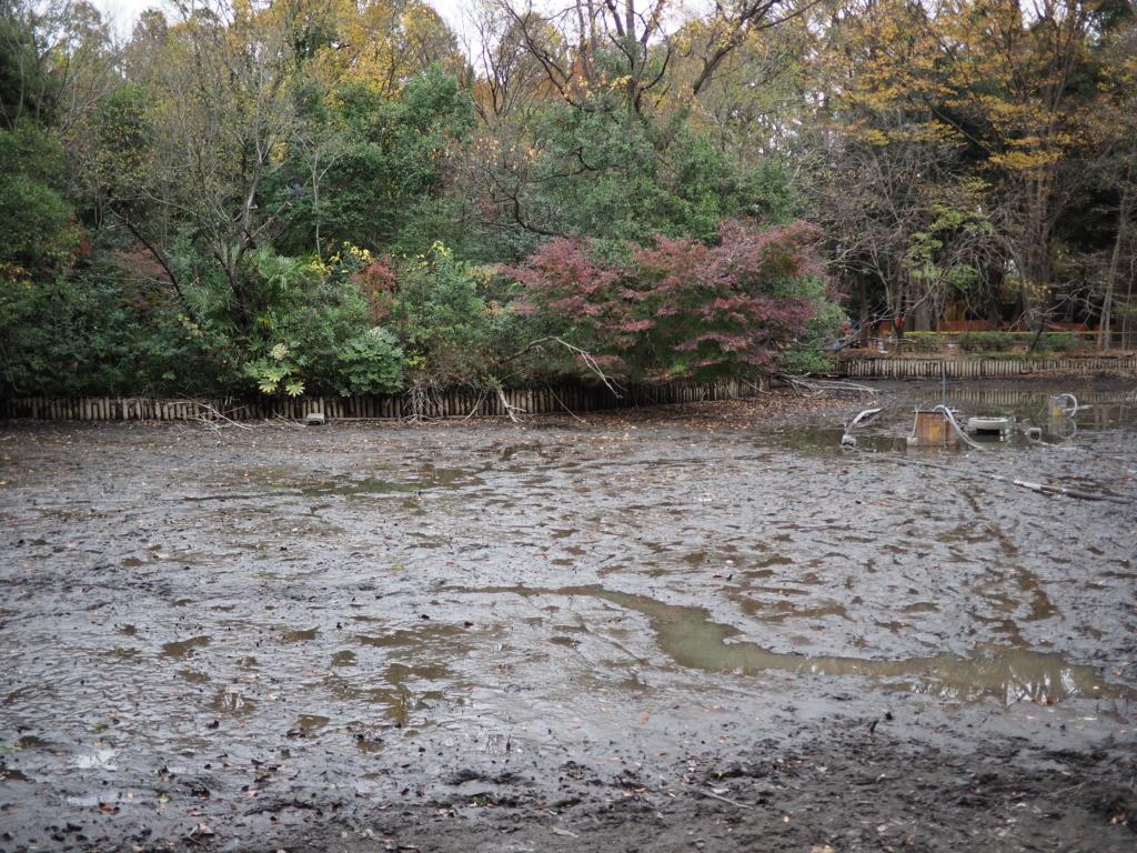 池の水を抜いた